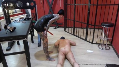 Scat Movie World - His cock gets fucked - Femdom Scat, Domination Scat